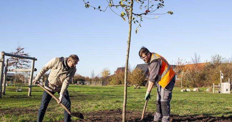 Meer dan 250 nieuwe bomen voor Ambacht